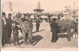 L200A_133 - Marseille - Exposition Coloniale - 67 Jeunes Eléphants Cambodgiens - Expositions Coloniales 1906 - 1922