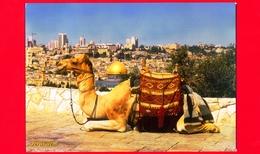 ISRAELE - Palestina -  Cartolina Viaggiata Nel 2011 - Gerusalemme - Cammello - Israele