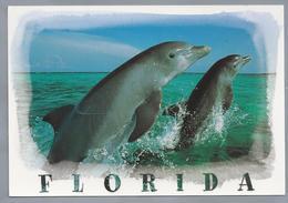 US.- FLORIDA. Dolphins. Dolfijnen. - Dolfijnen