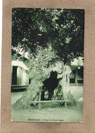 CPA - BISCARROSSE (40) - Thème : Arbre - Aspect Du Tronc De L'Orme Géant En 1934 - Biscarrosse