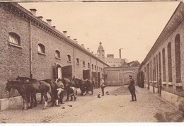 Brugge, Bruges, 4e Linieregiment, 4e Régiment De Ligne, Paardenpoetsen (pk54684) - Brugge