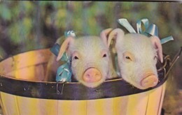Pigs A Snoot Full Greetings From Blue Ball Pennsylvania - Pigs