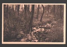 Blanmont - Les Molignats - Le 'Nil' Sous Bois - Chastre