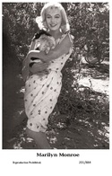 MARILYN MONROE - Film Star Pin Up PHOTO POSTCARD - 201-884 Swiftsure Postcard - Artistes