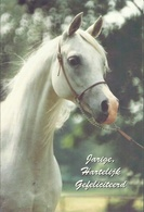 PAARD - HORSE - CHEVAL - PFERD  ( HAPPY BIRTHDAY ) - Autres Collections