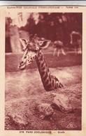 PARIS. PARC ZOOLOGIQUE, GIRAFE. EXPOSITION COLONIALE INTERNATIONALE 1931. BRAUN & CIE, NON CIRCULEE - BLEUP - Girafes