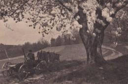 ZORANE BRAZDE KLICEJO KMETA NA DELO,SLOVENIA POSTCARD - Slovénie