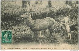 WW 02 VILLERS-COTTERETS. Chasse à Courre Equipage Menier Vers 1910. Hallali à La Route Du Faîte - Villers Cotterets