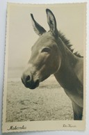 Makarska, Donkey, Magarac, 1950-ih, Croatia, Hrvatska, Foto Kapista, RPPC - Croatia