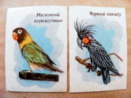 2 Matchbox Labels Safety Matches Ussr Animals Birds Oiseaux Parrots - Matchbox Labels