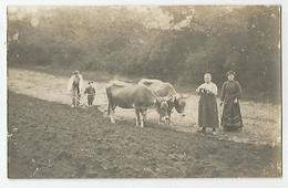 Carte Photo Paysans Labourage Attelage Boeufs Agriculture - Paysans