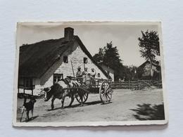 ELSENBORN - Attelage - Elsenborn (camp)
