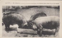 Cochons - En Ballade à ..... - Auge Cochons - Jeu Cartes Belotte - Pigs