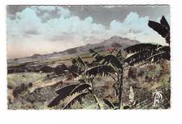 Martinique La Montagne Pelée Vue Du Morne Vert CPSM PF - Autres
