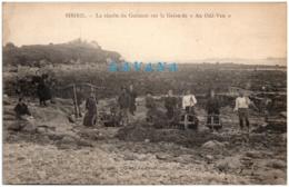 """29 SIBIRIL - La Récolte Du Goémon Sur La Grève De """"An Odé-Ven"""" - France"""