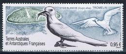FSAT (TAAF) , Bird, White Tern (Gygis Alba), 2019, MNH VF - Unused Stamps