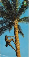 République De Coté D'Ivoire - Boundiali : Danseuses Senoufo - CPSM Format 21 X 10 Cm - Côte-d'Ivoire