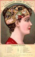 Humour : Phrenologie : étude Du Cerveau - Humour
