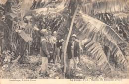 Guadeloupe - Scènes Et Types / 249 - La Coupe D'un Régime De Bananes - Guadeloupe