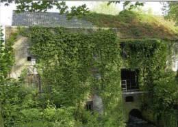 SINT-MARIA-LATEM ~ Zwalm (O.Vl.) - Molen/moulin/mill - De IJzerkotmolen Stroomafwaarts - Zwalm