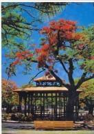 CARTE POSTALE GLACEE NOUVELLE CALEDONIE    KIOSQUE A MUSIQUE DE  NOUMEA  NON  ECRITE EDITIONS SOLARIS - Nouvelle-Calédonie