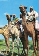ETHIOPIA CAMEL CARAVAN MASSAWA CARTE PHOTO - Ethiopie