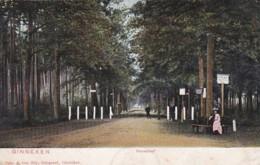 3712141     Ginneken, Huisdreef - Netherlands
