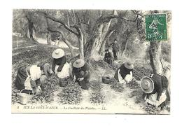 06 Nice Cueillette Des Viollettes 1908 - Petits Métiers
