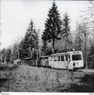 ALMACHE ..-- PALISEUL ..-- TRAM . 1959 . Transport De Bois Vers BOUILLON . Voir Verso . - Paliseul
