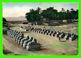 KARNAK, EGYPTE - THE AVENUE OF SPHINXES - CIRCULÉE - - Louxor