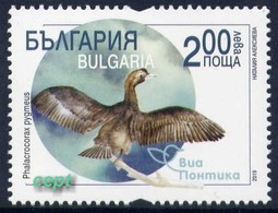 Small Cormorant(Phalacrocorax Pygmeus) – Via Pontica –  Bulgaria / Bulgarie  2019 - Stamp MNH** - Oiseaux