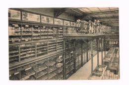Musée Royal D'Histoire Naturelle.Palier Moderne Et Quaternaire. - Musea
