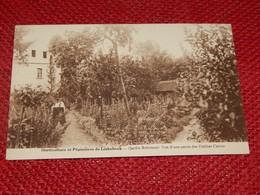 LINKEBEEK  -  Horticulture Et Pépinières - Jardin Robinson - Vue D'une Partie Des Dahlias Cactus - Linkebeek