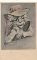 CHAT - Coquette ( Illustrateur ) - Chats