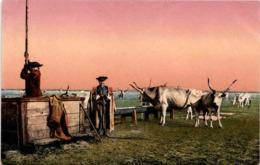 Hortobágy - An Der Tränke (211-12) - Ungarn