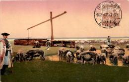 Hortobágy - Schweineherde (211-3) * 29. Juli 1922 - Ungarn