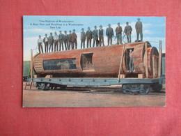 Bear Den & Dwelling In A Washington Saw Log  -ref 3148 - Bears