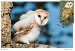 Jeune Chat-huant.  Dame Blanche,  Strigidae,  Belle Carte-maximum - Owls