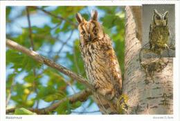 Hibou Moyen-duc,  Strigidae,  Belle Carte-maximum - Owls