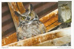 Barred Eagle-owl, Strigidae,  Belle Carte-maximum Thailande - Eagles & Birds Of Prey