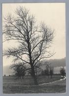 NL.- ALBLASSERWAARD. Een Enkele Hoge Boom Vangt Veel Landschap. Foto Leo Lanser Giessenburg. Natuur & Vogelwacht. - Arbres