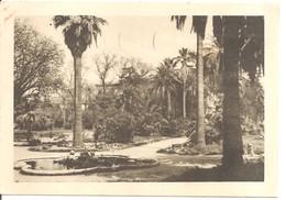 ISTITUTO ED ORTO BOTANICO DELLA UNIVERSITA' DI ROMA GIARDINO DI VILLA CORSINI - Parks & Gardens