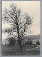 NL.- ALBLASSERWAARD. Een Enkele Hoge Boom Vangt Veel Landschap. Foto Leo Lanser Giessenburg. Natuur & Vogelwacht. - Bomen