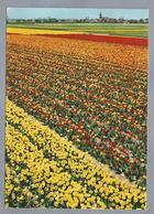NL.- Holland In Bloementooi. Tulpen - Bloemen