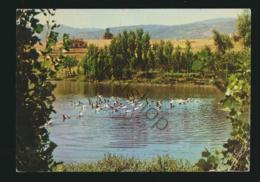 Ducks In The Lake Of Al Ghab Blane-Hama - Veldpost Utrecht Brigade Libanon [AA35 2.183 - Non Classés