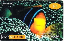 MICRONESIA - Clown Fish, FSM Tel Prepaid Card $5, Used - Micronesië