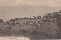 CPA Salève - Paturage Et Chalet De La Grande Gorge (avec Troupeau De Vaches) - France