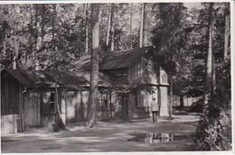 Foto Holzhaus Im Wald - Russland - Ca. 1940 - 8*5cm (39142) - Orte