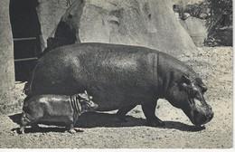 CPA ANIMAUX - HIPPOPOTAME Et SON PETIT ( Parc Zoologique Du Bois De Vincennes ) - Hippopotames