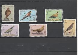 Oiseaux - Birds - Libye